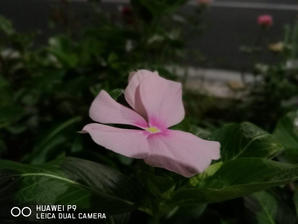 花(ワイドアパチャー)